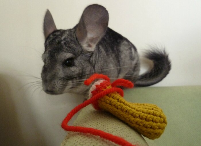 45 Chinchilla et amigurumi