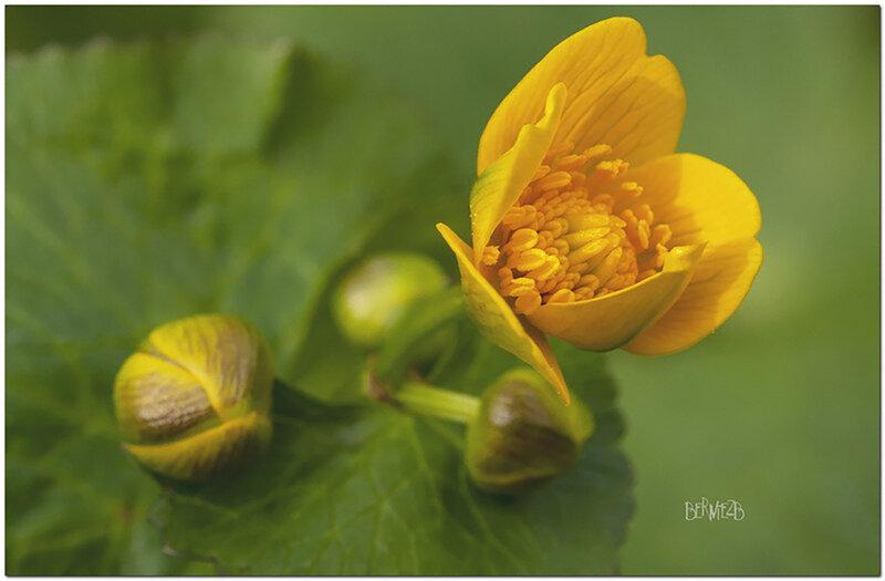 _DSC8718 fleur Jaune 1920x240 S