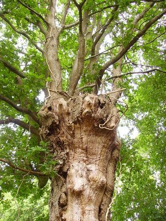 arbres_014