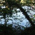 et les branches se courbent, pour caresser l'eau