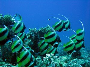 poissons_cocher