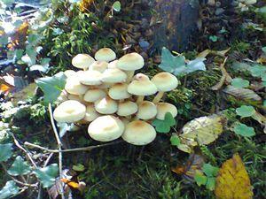 D'autres jolis champignons