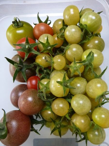 01-tomates cerises du jour (1)