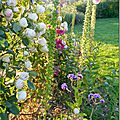 Windows-Live-Writer/Jardin_10232/DSCN0773_thumb