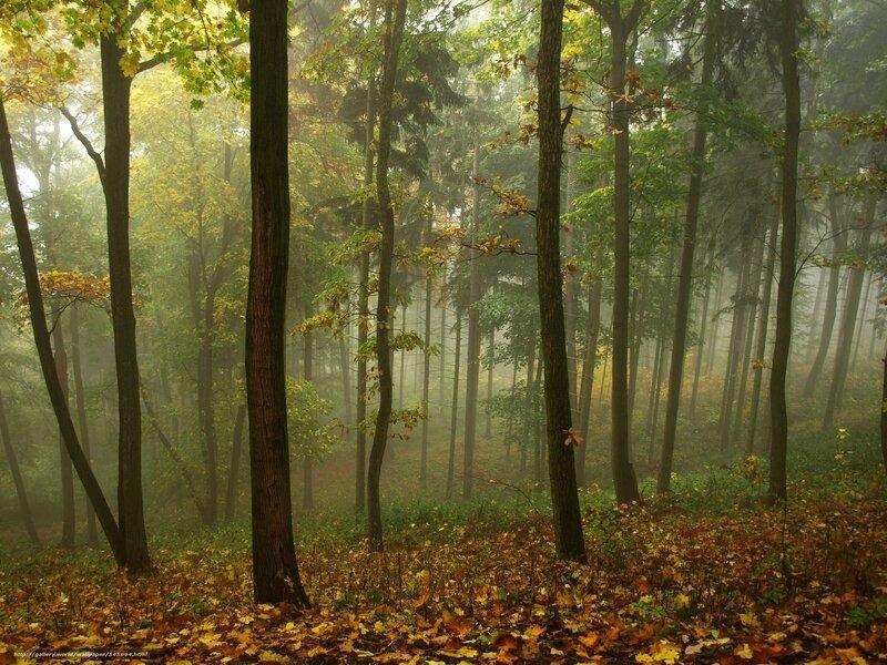 papier-peint-entree-maison-4-papier-peint-automne-arbres-brouillard-paysage-fort-1600x1200