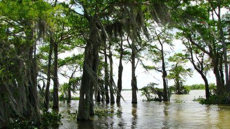 Mc Gee Swamp Tour 028