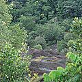 iselberg savane roche virginie