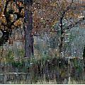 Et l'automne s'en va sifflant sa toune monotone