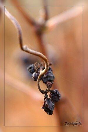 vigne_5