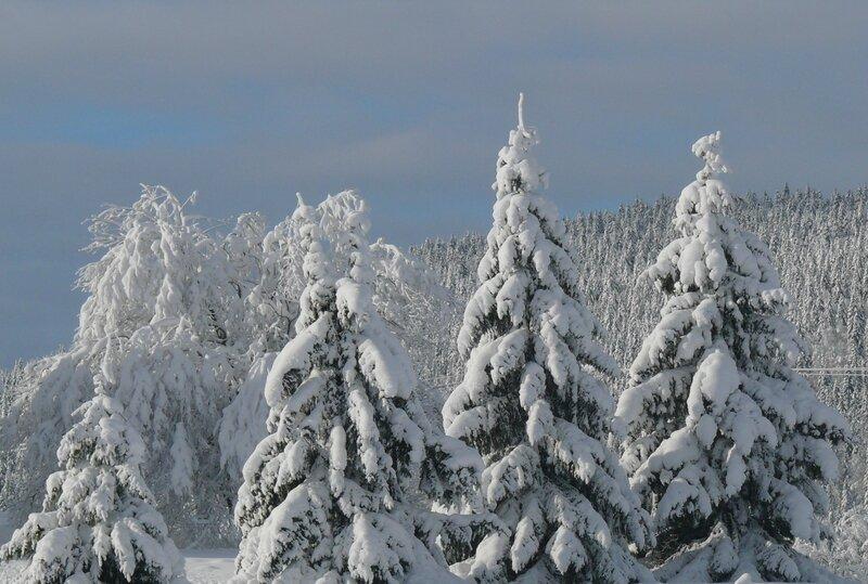 Lever de soleil sur les arbres enneigés