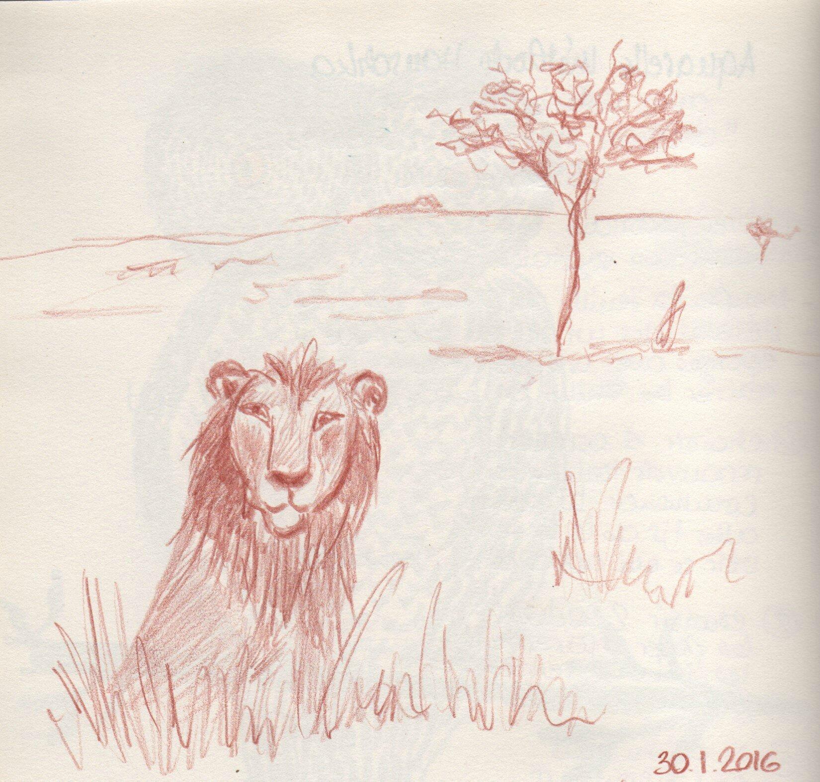 0130_lion