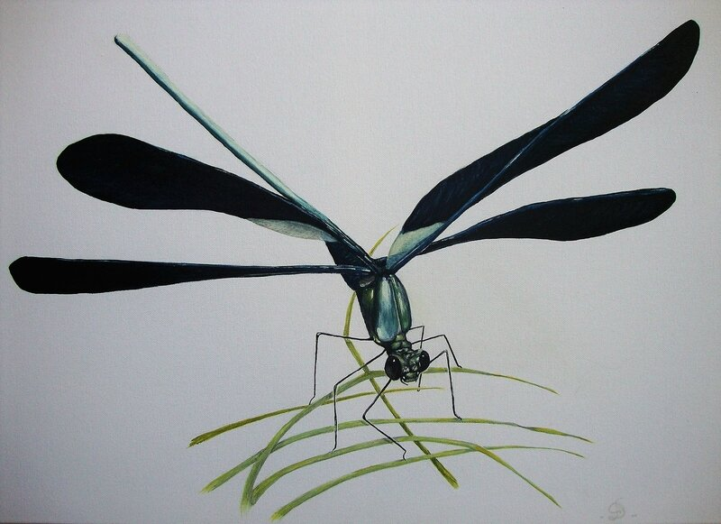 Caloptéryx vierge Demoiselle eurpéenne 70x50