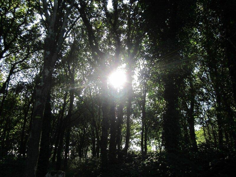 Soleil dans arbres St Kodelig