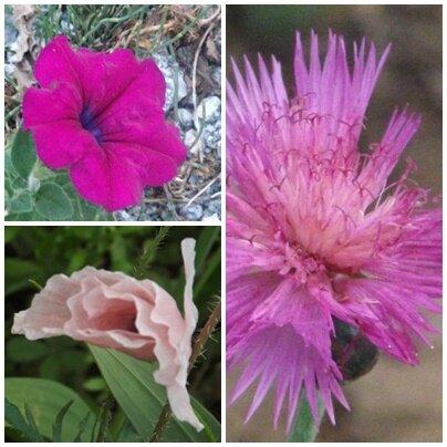 Fleurs du jardin (16)
