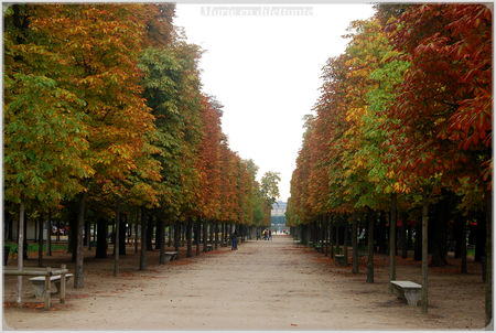 all_e_des_tuileries