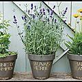 Pots terre cuire emaillée - graine de champion - marie jeanne - mauvaise herbe - pied de poule