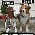 Être vegan, çà veut dire quoi ?