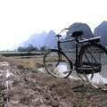 Vélo au milieu des rizieres