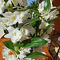 Bouquet du week end - sem 29