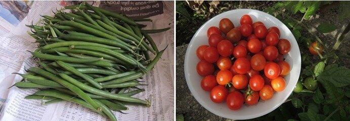 haricots tomates