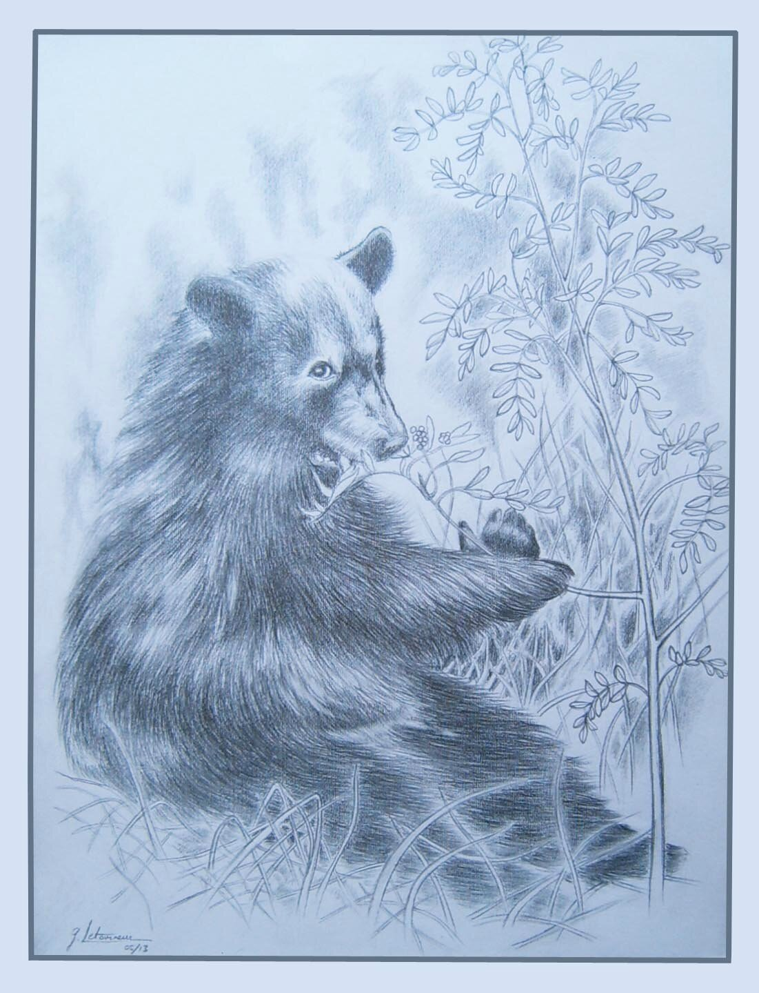 Ours noir américain Forêts Middle Ouest - Ours baribal Inspiration photo Daniel Cox - Drawing of bear - Desen de urs - Bärenzeichnung - Рисунок относительно медведя