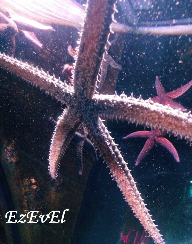 EzEvEl sea life stars 3