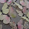 Papillons vert citron et rose