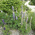 fleurs-de-breche (41)