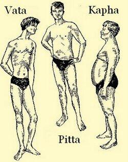 vata-pitta-kapha body types