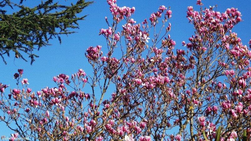 Magnolia 0602166