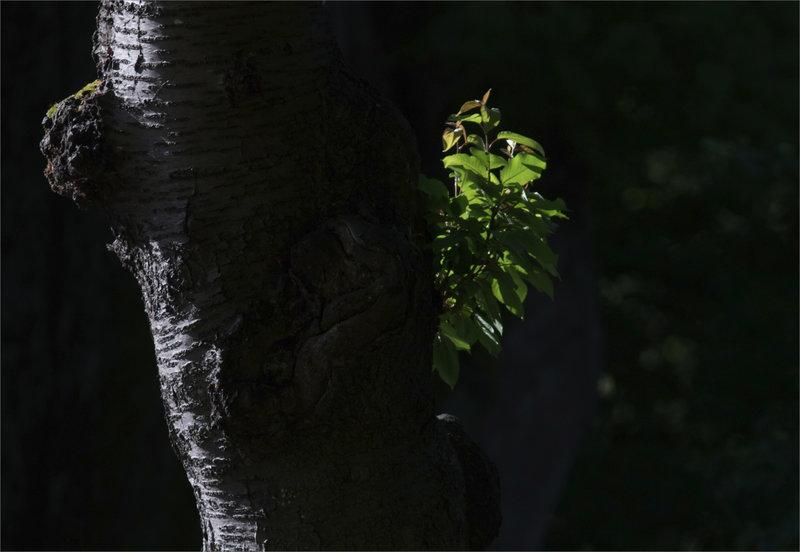 Arbre pousse feuilles contrej 050521