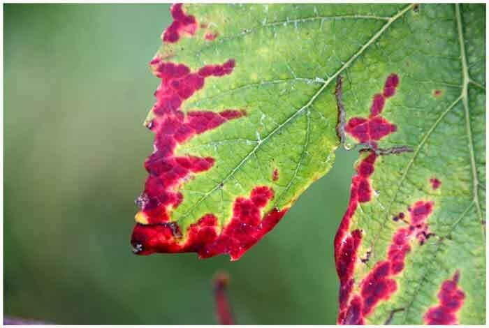 feuille-verte-et-rouge