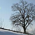 23/03/13 : arbres !