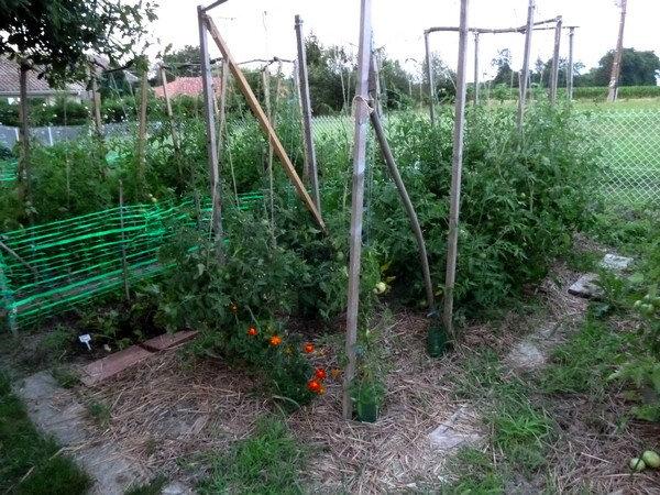 tomate en liberte juillet 2018