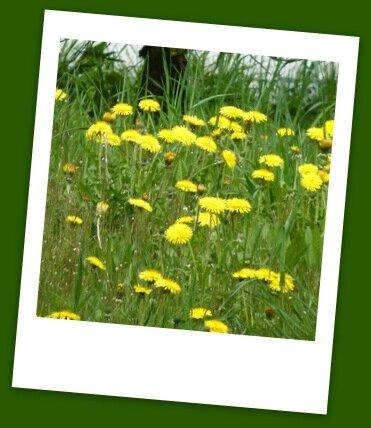Auvergne printemps