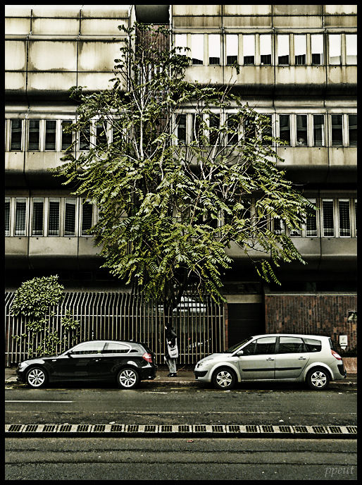 arbre_seul
