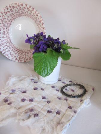 violettes_2011_008