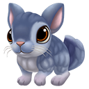 icon_chinchilla_adult_sapphireblue_128-01c2c546b308adee79191