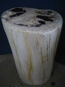 Fossil Stool
