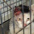 Zorey a été euthanasiée pour abréger ses souffrances