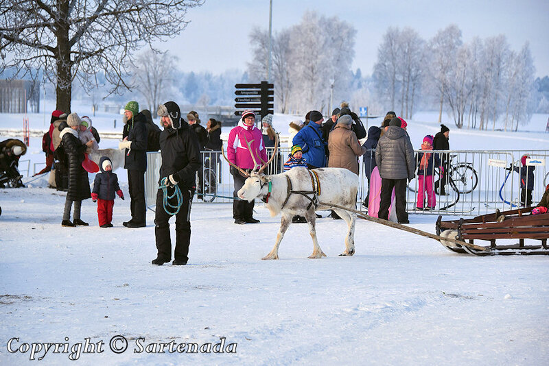 reindeer_rides_for_families_oulu_-9