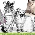 Caricatures de chats - mariage