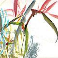 L'oiseau de paradis est aussi une constellation