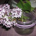 table lilas 072