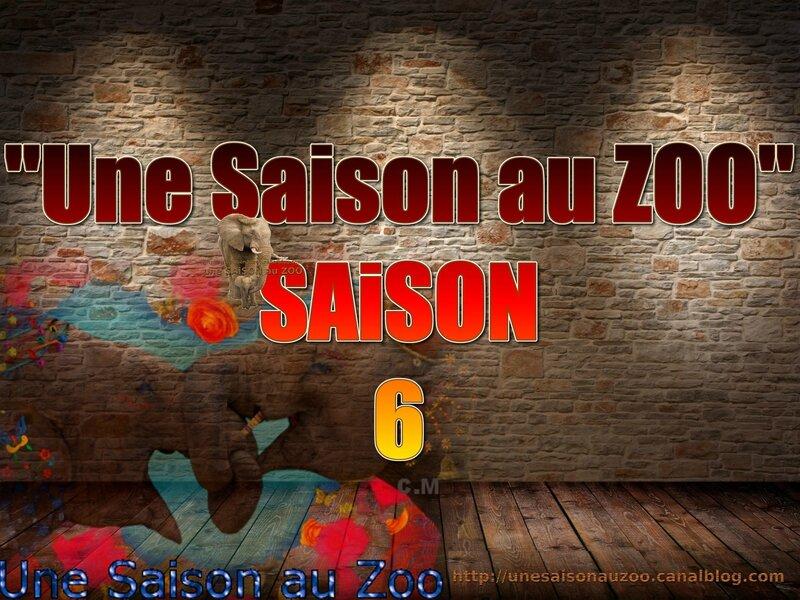 - une SAiSON au ZOO saison 6