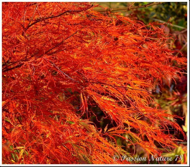 La forêt aux couleurs d'automne (29)