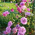 Windows-Live-Writer/Jardin_10232/DSCN0777_thumb