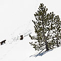 Emergences alpines 3