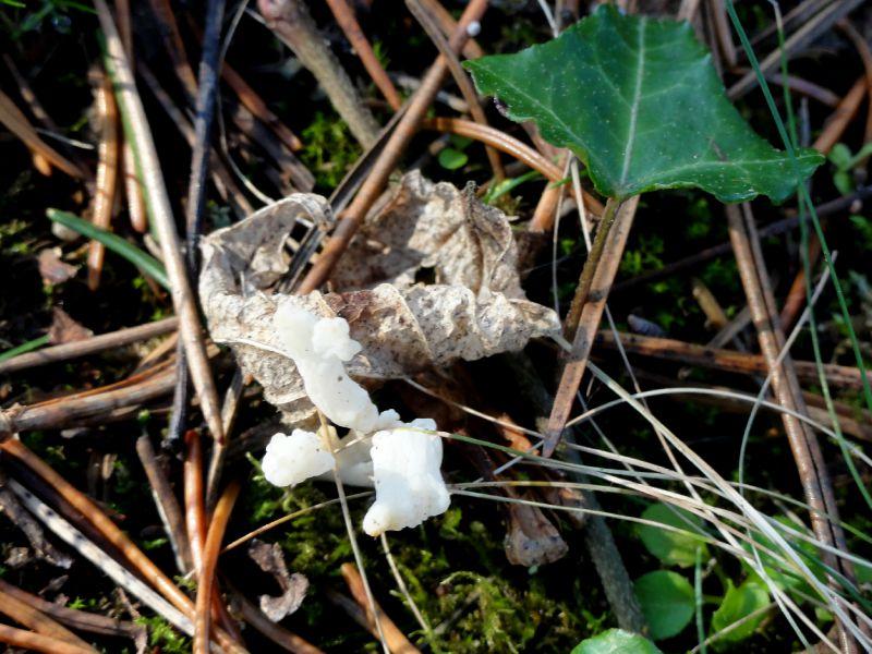 champignon-05923 (5)