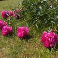 fleurs_001